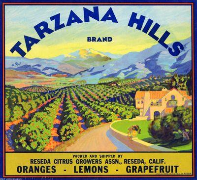 TarzanaHills