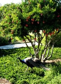 Arboretumherbgarden