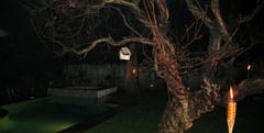 Bostoncherrytree2
