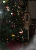 Christmastreecrazydog