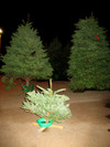 Littlexmastree_1