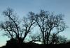 Malibucrktrees