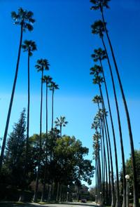 Pasadenapalms2_1