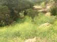 Stnypointmustardgrass_2