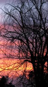 Treeonourblock2_1