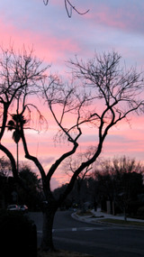 Treeonourblock_1